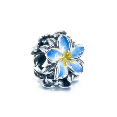 blue-frangipani-small-1000-for-website-500x500